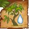 Roseto del baobab